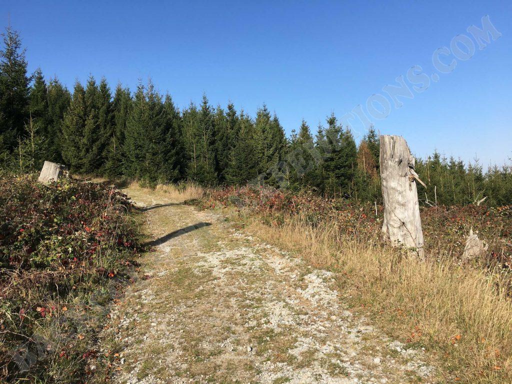 Hermannsklippe Oberharz