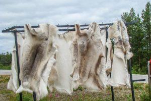 Rentierfell in Lappland