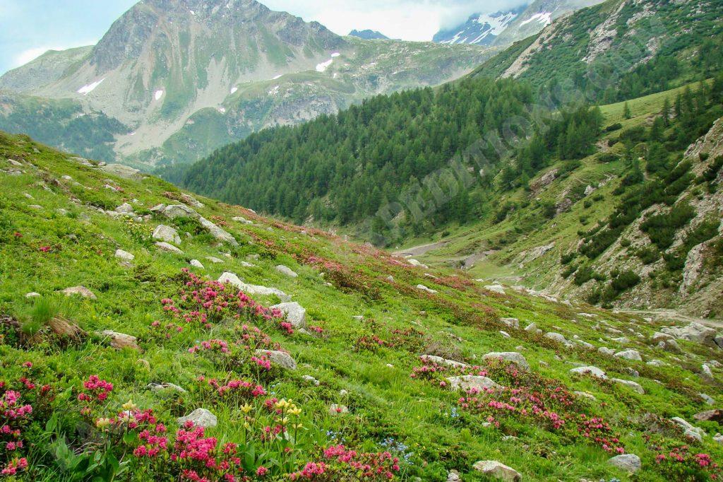 Alpen & Karparten